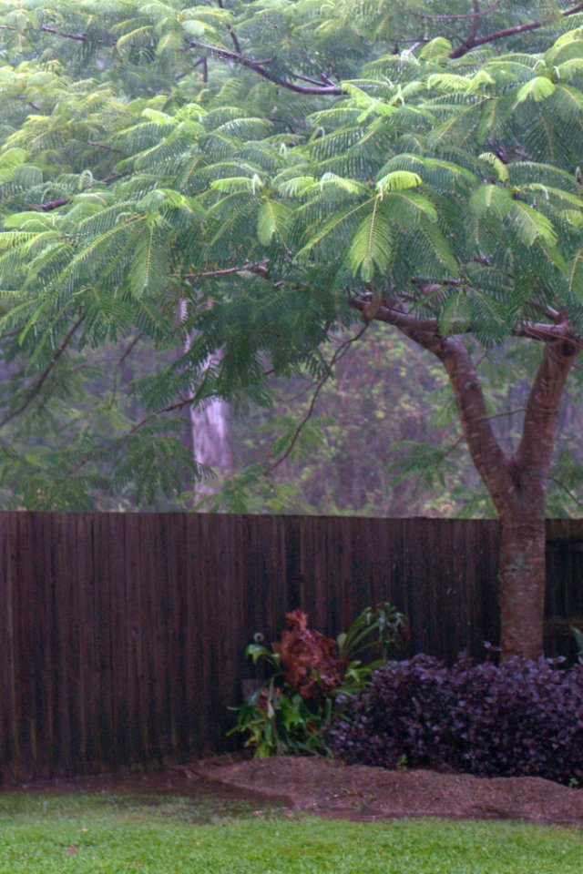 Rain falling in our backyard