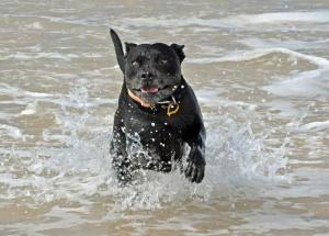Happy, wet dog
