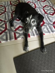 This rug was for her, to get her off the cold hard tiles, she lay next to it for a couple of weeks